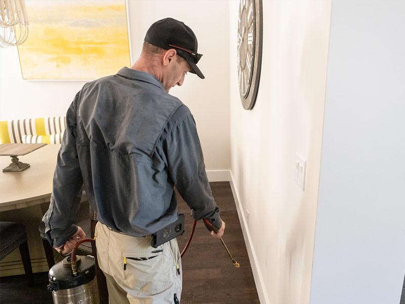 interior pest control, household bugs delray beach fl
